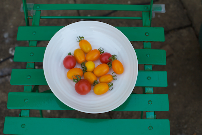 tomatoes from my garden last year